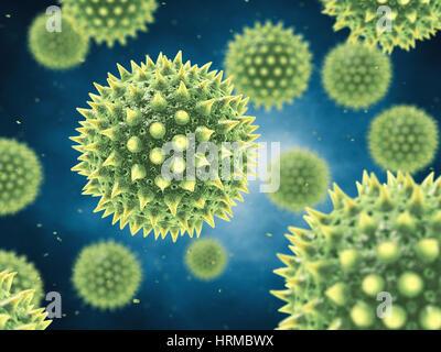 L'allergie au pollen est également connu sous le nom de rhume des foins ou rhinite allergique , grains de pollen aéroporté