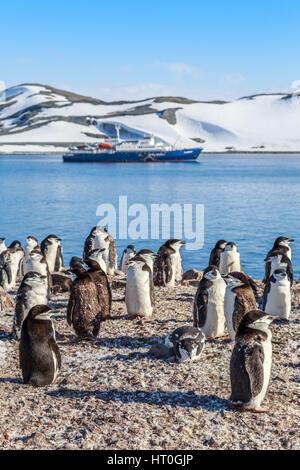 Manchots debout sur les rochers et une croisière dans l'arrière-plan à la baie de Neco, Antarctique