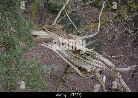 Branche tombée dans une forêt