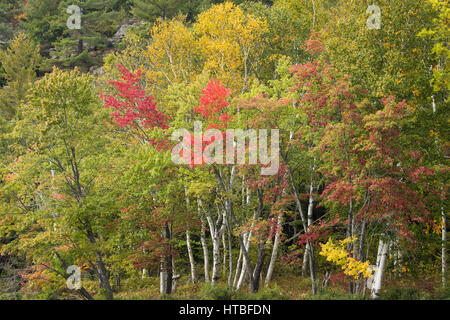 Couleurs d'Automne, lac Frood frangeant nr Whitefish Falls, District de Sudbury, Ontario, Canada