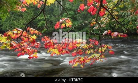 Couleurs d'automne le long de la rivière Oxtongue Oxtongue, Rapids Park, Ontario, Canada