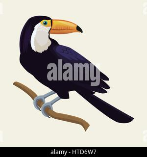 Toucan oiseau tropical exotique Banque D'Images