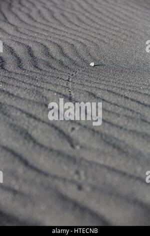 Une petite pierre est soufflé par le vent à travers le sable volcanique noir à motifs montrant le chemin qu'il a Banque D'Images
