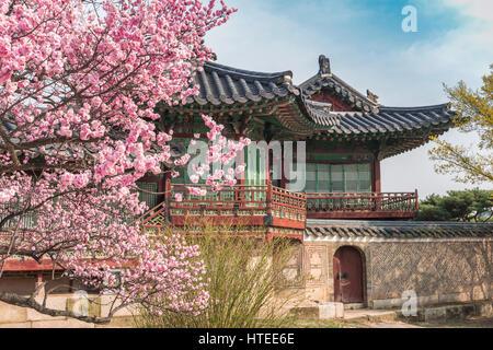 Cerisiers en fleurs de printemps au Palais Changdeokgung, Seoul, Corée du Sud Banque D'Images