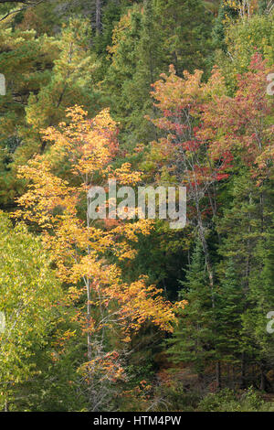 Couleurs d'Automne, lac Charlton frangeant nr Whitefish Falls, District de Sudbury, Ontario, Canada