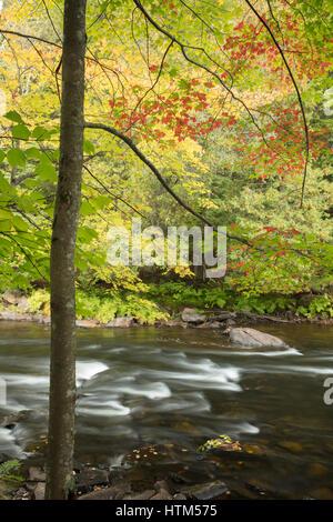 Couleurs d'automne le long de la rivière Oxtongue à Ragged Falls Provincial Park, Ontario, Canada