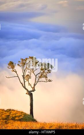 Lonely tree sur un sommet d'une crête du volcan Gunung Rinjani à Lombok, Indonésie Banque D'Images
