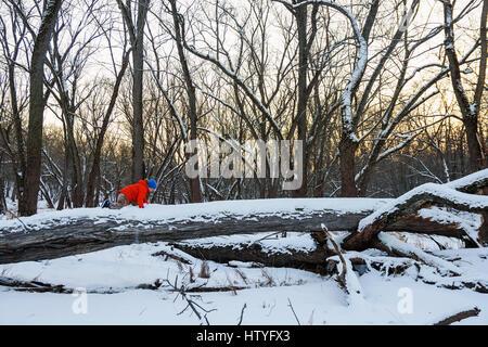 Rampant le long garçon arbre tombé dans la forêt Banque D'Images
