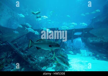 Beaucoup de poissons dans l'aquarium du grand bleu. Dans l'aquarium sous-marin magnifique Banque D'Images