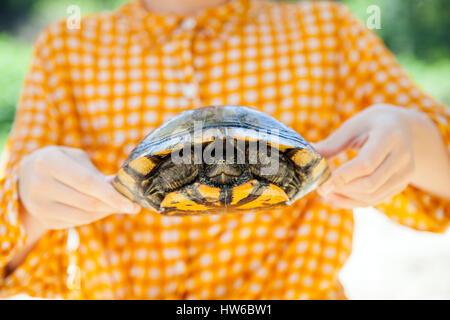 Tenir une tortue Banque D'Images