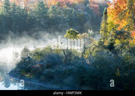 Brume matinale le long de la rivière Oxtongue, Ontario, Canada