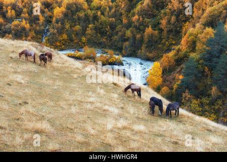 Paysage d'automne d'or entre les montagnes rocheuses et la rivière bruyante en Géorgie. Les chevaux pâturage. L'Europe Banque D'Images