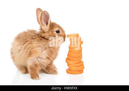 Près d'une carotte au lapin blanc Banque D'Images