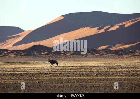 La Namibie, Oryx dans habitats désertiques typiques Banque D'Images