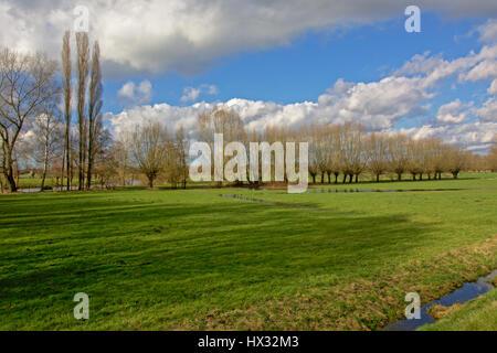 Paysage agricole flamand typique en hiver avec des rangées d'arbres et d'un fossé Banque D'Images