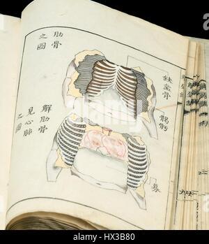 Un livre ouvert montrant deux dessins schématiques de la poitrine de l'atlas anatomique hen Kaishi Japonais par Shinnin Kawaguchi (1736-1811), 1772. La permission de la National Library of Medicine.