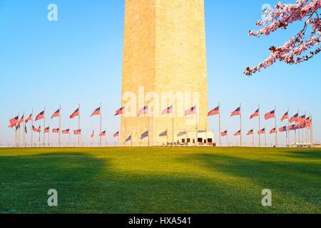 Cherry Blossom près du Monument de Washington, USA Banque D'Images