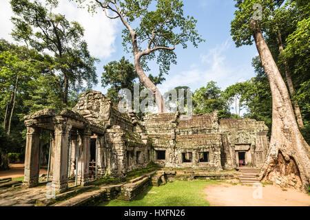 Ta Prohm temple Khmer célèbre dans le complexe d'Angkor Wat à Siem Reap, au Cambodge, où la nature se fond avec Banque D'Images