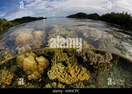 Un beau récif corallien sain et pousse le long du bord d'une île éloignée de Raja Ampat, en Indonésie. Cette région Banque D'Images