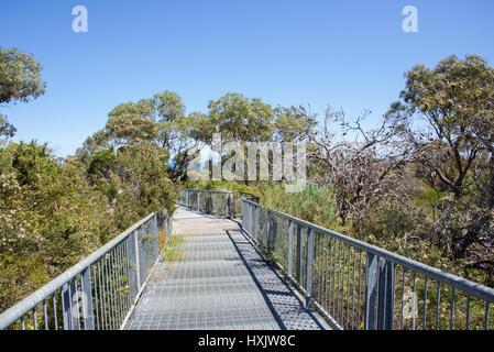 Passage Reabold Hill sur la cime des arbres à Bold Park à City Beach, Australie de l'Ouest sur une bonne journée Banque D'Images