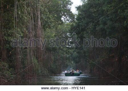 La Caroni Swamp, un espace Wildlife Sanctuary situé à l'embouchure de la rivière Caroni. Banque D'Images
