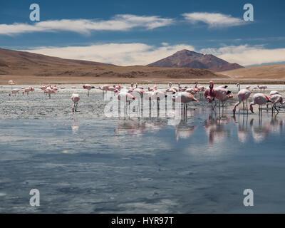 Un groupe de flamants roses dans Laguna Cañapa, ces oiseaux sont très courant dans le lac salé endoréique dans le Banque D'Images
