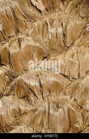 Gros plan d'une petite partie de l'écorce de palmier Banque D'Images
