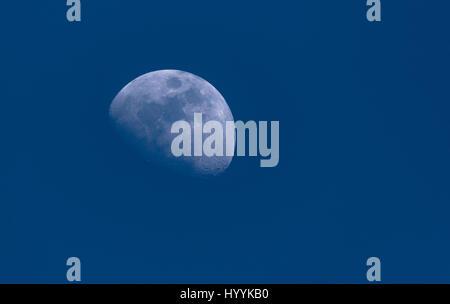 La lune, dans une phase gibbeuse dans le bleu ciel du matin. l'arrière-plan des cratères détaillées. côté gauche. Banque D'Images
