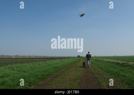 Un chien-walker sur un sentier public à travers les terres agricoles dans le Cambridgeshire Banque D'Images