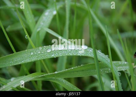 Waterdrop sur un brin d'herbe Banque D'Images