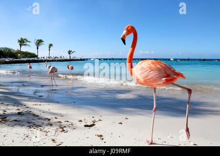 Les meilleures plages d'Aruba: Flamingo Beach de l'hôtel Renaissance