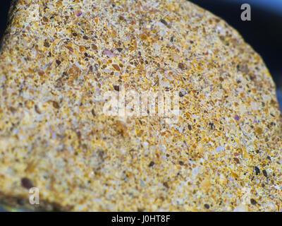 La pierre de macro shot coquillages trempé Banque D'Images