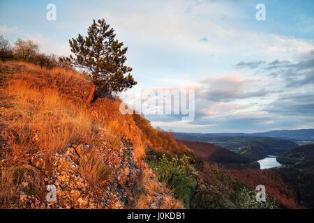 Lonely tree debout sur le côté de la montagne avec belle vue panoramique vue sur la prairie Banque D'Images