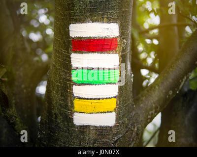 Randonnées triple signe sur le tronc de l'arbre, rouge, vert et jaune avec l'arrière-plan flou floue insolite, symbole Banque D'Images