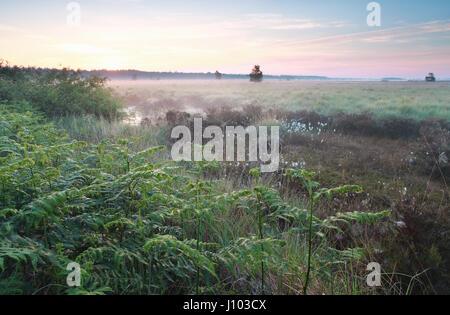 Lever de soleil sur misty swamp au printemps Banque D'Images