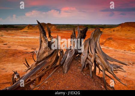 Paysage désertique dans le Parc National de Sarigua, Herrera province, République du Panama.