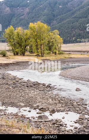 Paysage pittoresque de Slough Creek dans la vallée de Lamar, Yellowstone National Park, Wyoming, USA. Slough Creek est un affluent de la rivière Lamar.