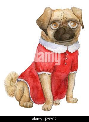Un portrait du PUG, vadrouilles, fille du pug-dog cutie dans une jolie robe rouge Banque D'Images