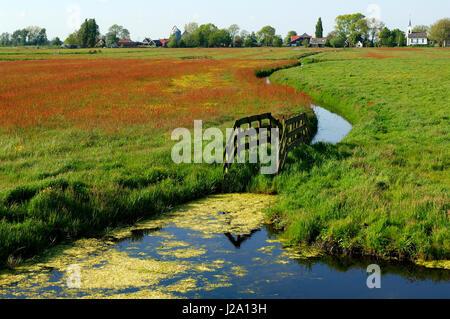 Impression de printemps à Waterland Polder Banque D'Images