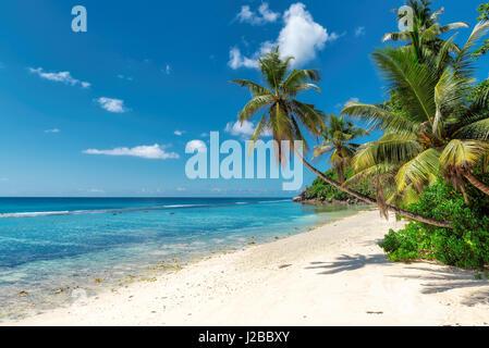 Paradise tropical ocean Plage avec sable blanc, eau turquoise transparente et la noix de coco palmier en journée ensoleillée
