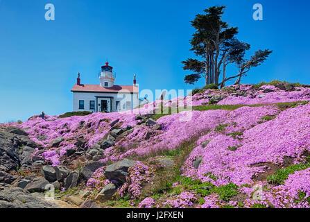 La Californie, Crescent City, phare de Battery Point, des fabriques de glace en pleine floraison Banque D'Images