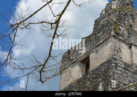Branche de l'arbre avec la partie supérieure du temple i sur l'arrière-plan, dans le parc national de Tikal, guatemala, Banque D'Images