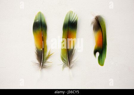 Pen trois pièces d'oiseaux multicolores perroquet sur un fond blanc. La photo pour votre conception Banque D'Images