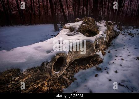 Arbre couvert de neige tombée dans la nuit