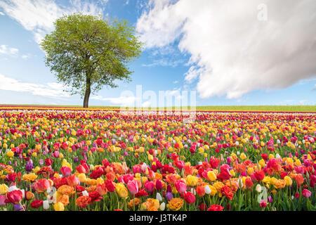 Paysage de printemps avec des fleurs colorées Banque D'Images