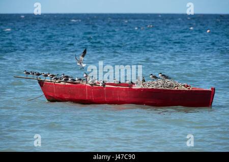 Des mouettes perchées sur un vieux bateau de pêche en bois rouge le long de la côte nord-ouest de la Grenade près Banque D'Images