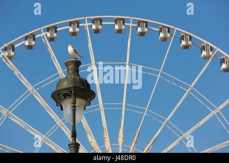 Grande roue et la lampe de rue à Paris.Une mouette se repose sur la lampe. Banque D'Images
