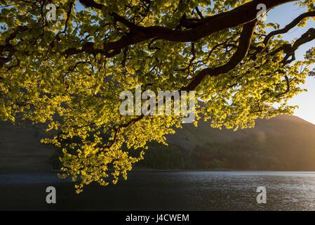 La tombée de la lumière à la lande dans le Lake District, Cumbria England UK Banque D'Images