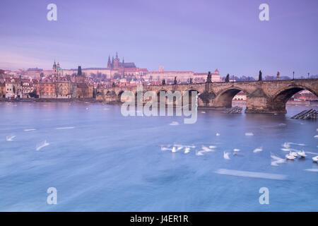 Cygnes blancs sur la Vltava et le pont Charles historique au lever du soleil, Site du patrimoine mondial de l'UNESCO, Banque D'Images