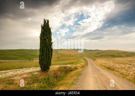 Lonely tree et la route d'asphalte dans les douces collines verdoyantes de Val d'Orcia, l'UNESCO, Province de Sienne, Banque D'Images